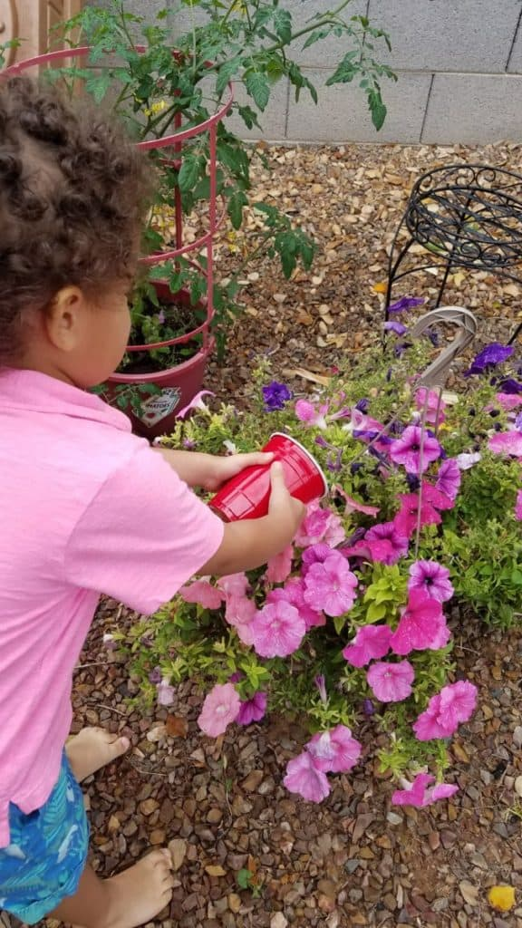 boy watering pink flowers in a garden
