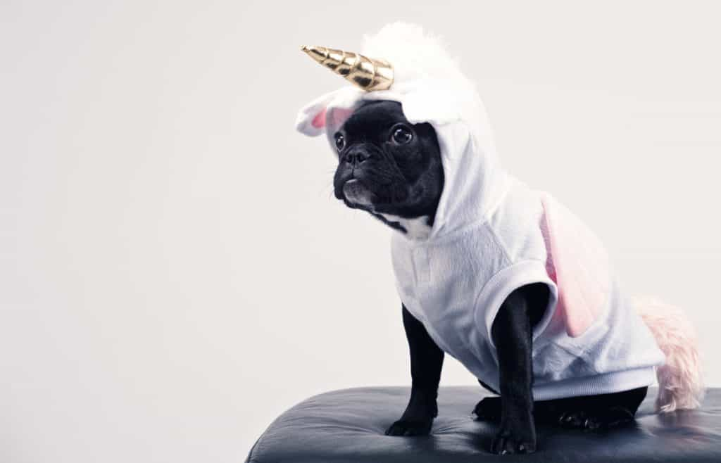 small dog in a unicorn costume